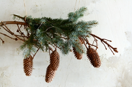 Spruce branch with scandinavian style.