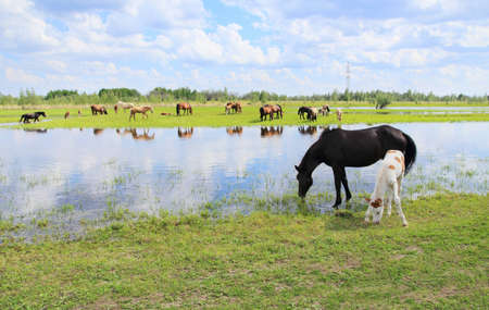 Horses graze in a meadow near the river.